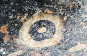 Karoo Mediengestaltung Fotografie: Objekt / Natur